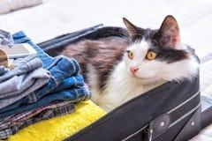 Συνεδρίαση γατών στη βαλίτσα στοκ εικόνες με δικαίωμα ελεύθερης χρήσης