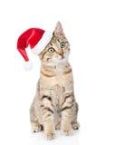 συνεδρίαση γατών στο κόκκινο καπέλο Χριστουγέννων που κοιτάζει μακριά Στο λευκό Στοκ Εικόνες
