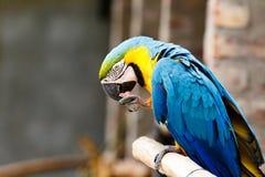 Συνεδρίαση και κατανάλωση παπαγάλων Στοκ Φωτογραφίες