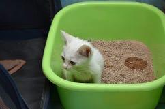 Συνεδρίαση κατάρτισης γατακιών στη λεκάνη Στοκ εικόνες με δικαίωμα ελεύθερης χρήσης