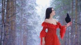 Συνεδρίαση κορακιών σε έναν ταλαντεμένος βραχίονα του κοριτσιού σε ένα κόκκινο φόρεμα απόθεμα βίντεο