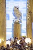 Συνεδρίαση κουκουβαγιών στο κολόβωμα Στοκ εικόνες με δικαίωμα ελεύθερης χρήσης