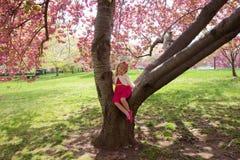 Συνεδρίαση νέων κοριτσιών στο δέντρο ανθών κερασιών Στοκ φωτογραφία με δικαίωμα ελεύθερης χρήσης
