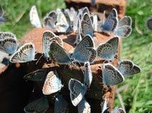 Συνεδρίαση πεταλούδων σε ένα τούβλο Στοκ φωτογραφία με δικαίωμα ελεύθερης χρήσης