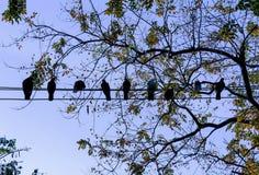 Συνεδρίαση πουλιών περιστεριών στο ηλεκτρικό καλώδιο Στοκ εικόνα με δικαίωμα ελεύθερης χρήσης
