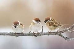 Συνεδρίαση πουλιών σε έναν κλάδο στο πάρκο και να εξετάσει την απόσταση στοκ εικόνες