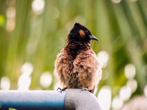 Συνεδρίαση πουλιών σε έναν σωλήνα στοκ φωτογραφία