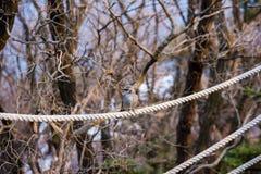 Συνεδρίαση πουλιών σε ένα σχοινί στοκ εικόνες
