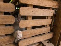 Συνεδρίαση ποδιών γατακιών ` Στοκ εικόνα με δικαίωμα ελεύθερης χρήσης