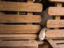 Συνεδρίαση ποδιών γατακιών ` Στοκ φωτογραφία με δικαίωμα ελεύθερης χρήσης