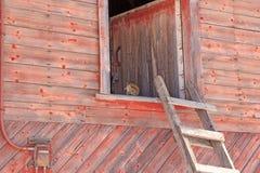 Συνεδρίαση σκιούρων σε μια σοφίτα σιταποθηκών Στοκ Φωτογραφίες
