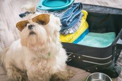 Συνεδρίαση σκυλιών δίπλα στη βαλίτσα Στοκ Εικόνες