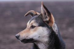 Συνεδρίαση σκυλιών μόνη Στοκ φωτογραφία με δικαίωμα ελεύθερης χρήσης
