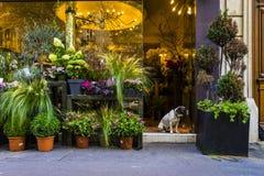 Συνεδρίαση σκυλιών στην πόρτα του ανθοπωλείου του Παρισιού Στοκ φωτογραφία με δικαίωμα ελεύθερης χρήσης