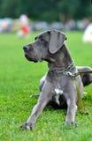 Συνεδρίαση σκυλιών στη χλόη στοκ εικόνες