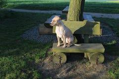 Συνεδρίαση σκυλιών στον πάγκο στοκ φωτογραφίες