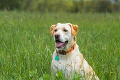 Συνεδρίαση σκυλιών στον τομέα Στοκ φωτογραφίες με δικαίωμα ελεύθερης χρήσης