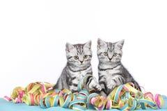 Συνεδρίαση δύο γατακιών στις ταινίες Στοκ φωτογραφία με δικαίωμα ελεύθερης χρήσης