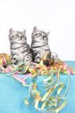 Συνεδρίαση δύο γατακιών στις ταινίες Στοκ Φωτογραφία