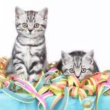 Συνεδρίαση δύο γατακιών στις ταινίες Στοκ Εικόνα
