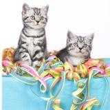 Συνεδρίαση δύο γατακιών στις ταινίες Στοκ Εικόνες