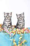 Συνεδρίαση δύο γατακιών στις ταινίες Στοκ Φωτογραφίες