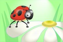 Συνεδρίαση Ladybug σε ένα chamomile πέταλο Στοκ Φωτογραφίες