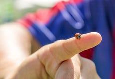 Συνεδρίαση Ladybug σε ετοιμότητα παιδιών Στοκ Εικόνες