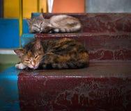 Συνηθισμένη ζωή Γάτες Σκαλοπάτια Στοκ φωτογραφία με δικαίωμα ελεύθερης χρήσης