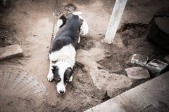 Συνηθισμένο σκυλί που ικετεύει για να παίξει Στοκ εικόνες με δικαίωμα ελεύθερης χρήσης