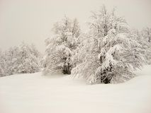 Συννεφιάζω χιονώδης σκηνή των χιονισμένων δέντρων και του καλύμματος του χιονιού στοκ φωτογραφίες με δικαίωμα ελεύθερης χρήσης