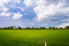 Συννεφιασμένος πέρα από τον τομέα ρυζιού πριν από τη θύελλα βροχής στοκ φωτογραφία με δικαίωμα ελεύθερης χρήσης