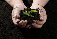 συντήρησης περιβαλλοντικές αγροτών φρέσκες χεριών εκμετάλλευσης νεολαίες συμβόλων φυτών ζωής νέες Στοκ Εικόνα