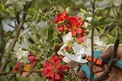 Συντήρηση δέντρων Στοκ εικόνες με δικαίωμα ελεύθερης χρήσης