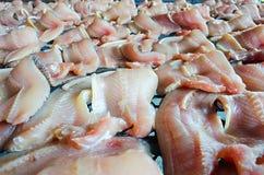 Συντήρηση των αποξηραμένων φίδι-επικεφαλής ψαριών με τον ήλιο Στοκ Εικόνες