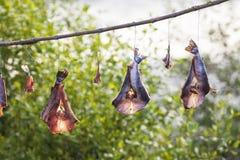 Συντήρηση ψαριών Στοκ εικόνα με δικαίωμα ελεύθερης χρήσης