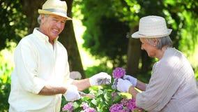 Συνταξιούχος κοπή ατόμων λουλούδια για τη σύζυγό του απόθεμα βίντεο