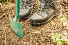 Συνταξιούχος σκάψτε για τις εγκαταστάσεις στοκ εικόνα
