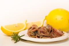 Συντηρημένες αντσούγιες με τις ντομάτες και το λεμόνι Στοκ Εικόνα