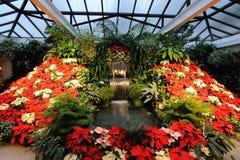 συντηρητικά λουλούδια Στοκ Εικόνες