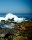 Συντριβή κυμάτων πίσω από τα λιοντάρια θάλασσας στοκ φωτογραφία με δικαίωμα ελεύθερης χρήσης