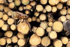 Συνδέεται το δάσος Στοκ φωτογραφία με δικαίωμα ελεύθερης χρήσης