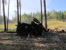 Συνδέεται το δάσος Στοκ Εικόνες