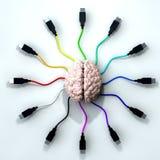 συνδεδεμένο μυαλό Στοκ Φωτογραφίες