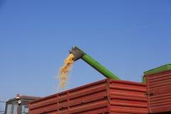 Συνδυάστε τη θεριστική μηχανή χύνει τους σπόρους αραβόσιτου καλαμποκιού Στοκ Εικόνες