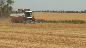 συνδυάστε τις ώριμες ξηρές εγκαταστάσεις μπιζελιών συγκομιδών μηχανών στο αγρόκτημα απόθεμα βίντεο