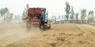 Συνδυάστε τον τομέα δημητριακών συγκομιδής, Κίνα Στοκ Φωτογραφία