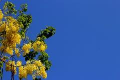 Συρίγγιο 3 της Cassia στοκ φωτογραφία