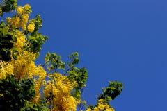 Συρίγγιο 2 της Cassia στοκ φωτογραφίες