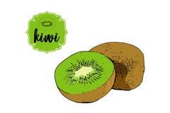 Συρμένα κινούμενα σχέδια φρούτα ακτινίδιων που απομονώνονται στο λευκό Πράσινο αναδρομικό διακριτικό ετικετών καταστημάτων διανυσματική απεικόνιση